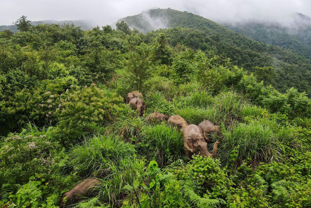 COP15,靠谱!